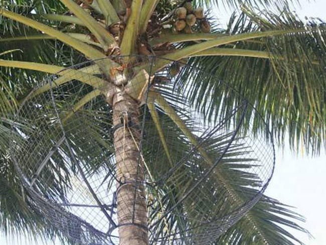 Coconut Safety Nets in Chennai