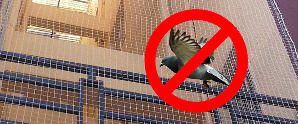 Pigeon Safety Nets in Chennai